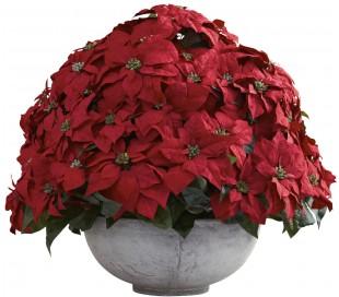 Luksus poinsettia i potte H75 cm x Ø85 cm - Rød