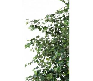 Bouleau træ i potte H300 cm