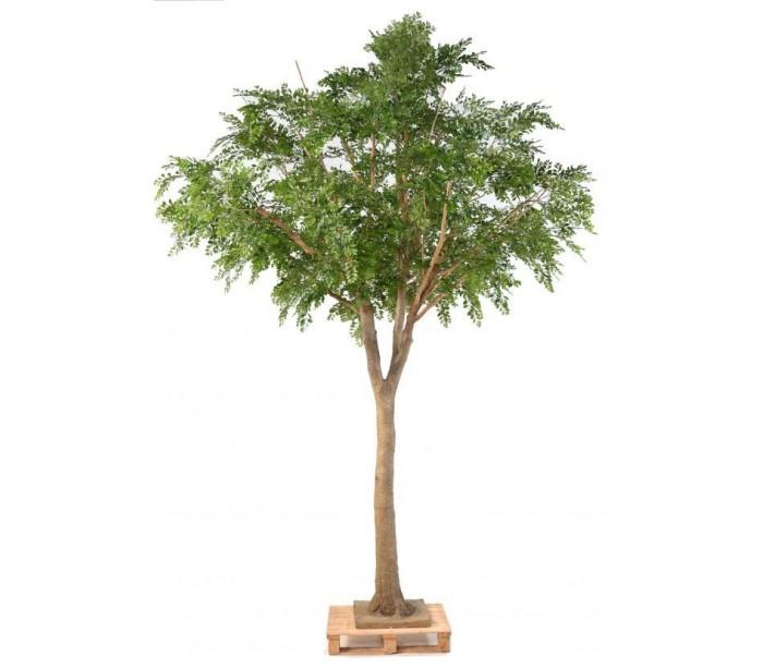 Bucida træ H360 x Ø280 cm