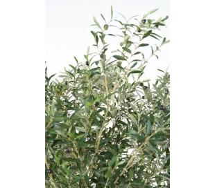 Stort kunstigt Oliventræ H215 cm
