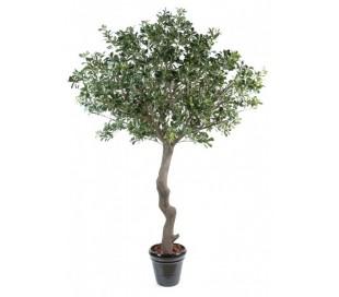 Kunstigt Pittosporum træ H260 cm