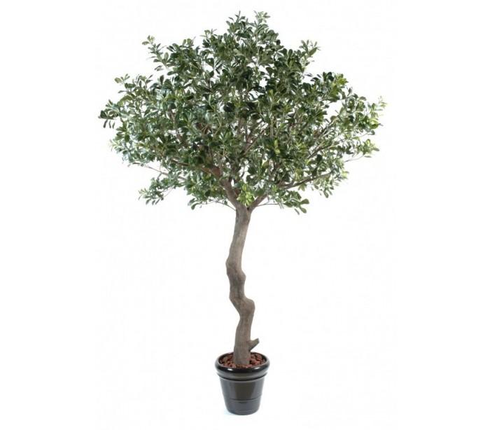 Image of   Kunstigt Pittosporum træ H260 cm